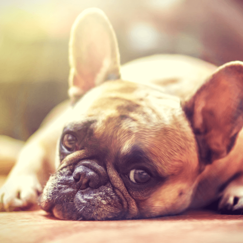 Did You Know? 15 Amazing Facts About Your Dog
