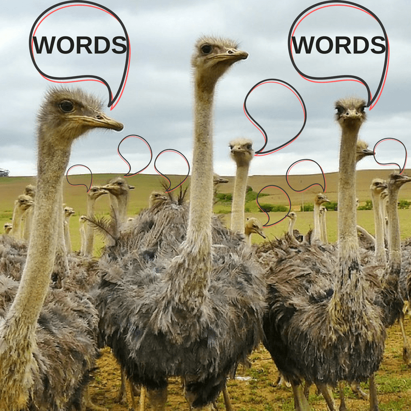 The Power of Your Words Part 1: South Africa