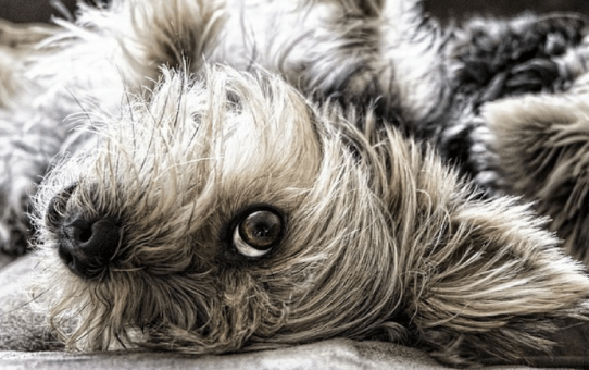 41 BIZARRE ANIMAL LAWS OF THE WORLD
