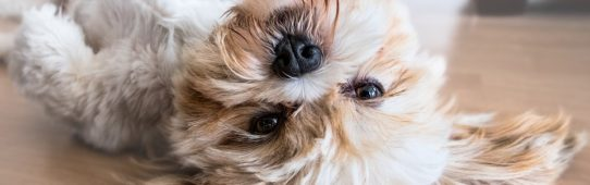 15 Unexpected Benefits of Owning a Pet