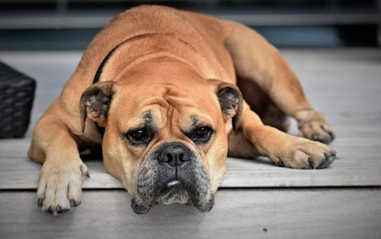 13 Signs Your Doggy is Sick